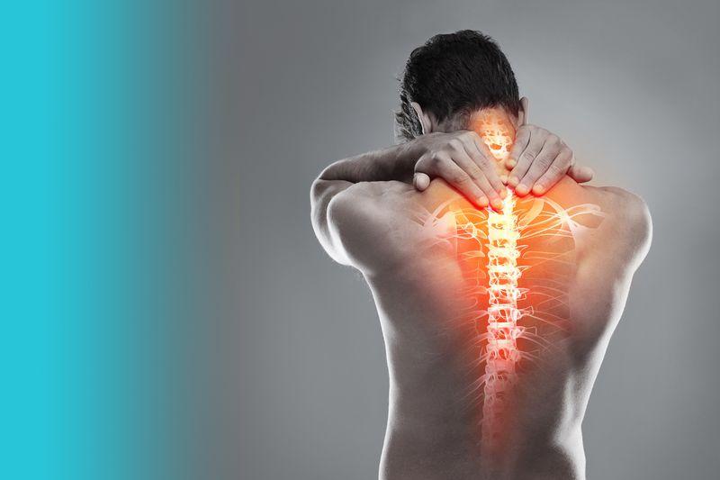 human spine artwork