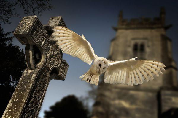 Owl & Gravestone