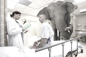 elephant-in-hospital.jpg
