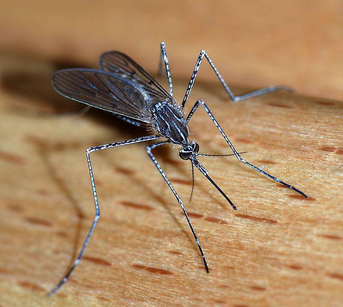 Avoiding mosquito bites