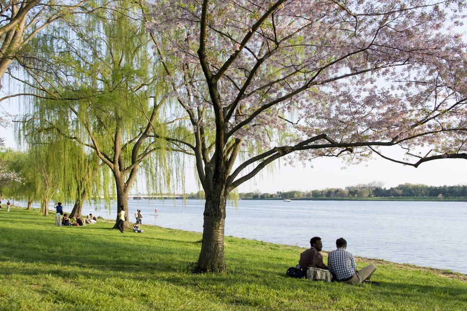 West Potomac Park, Washington DC