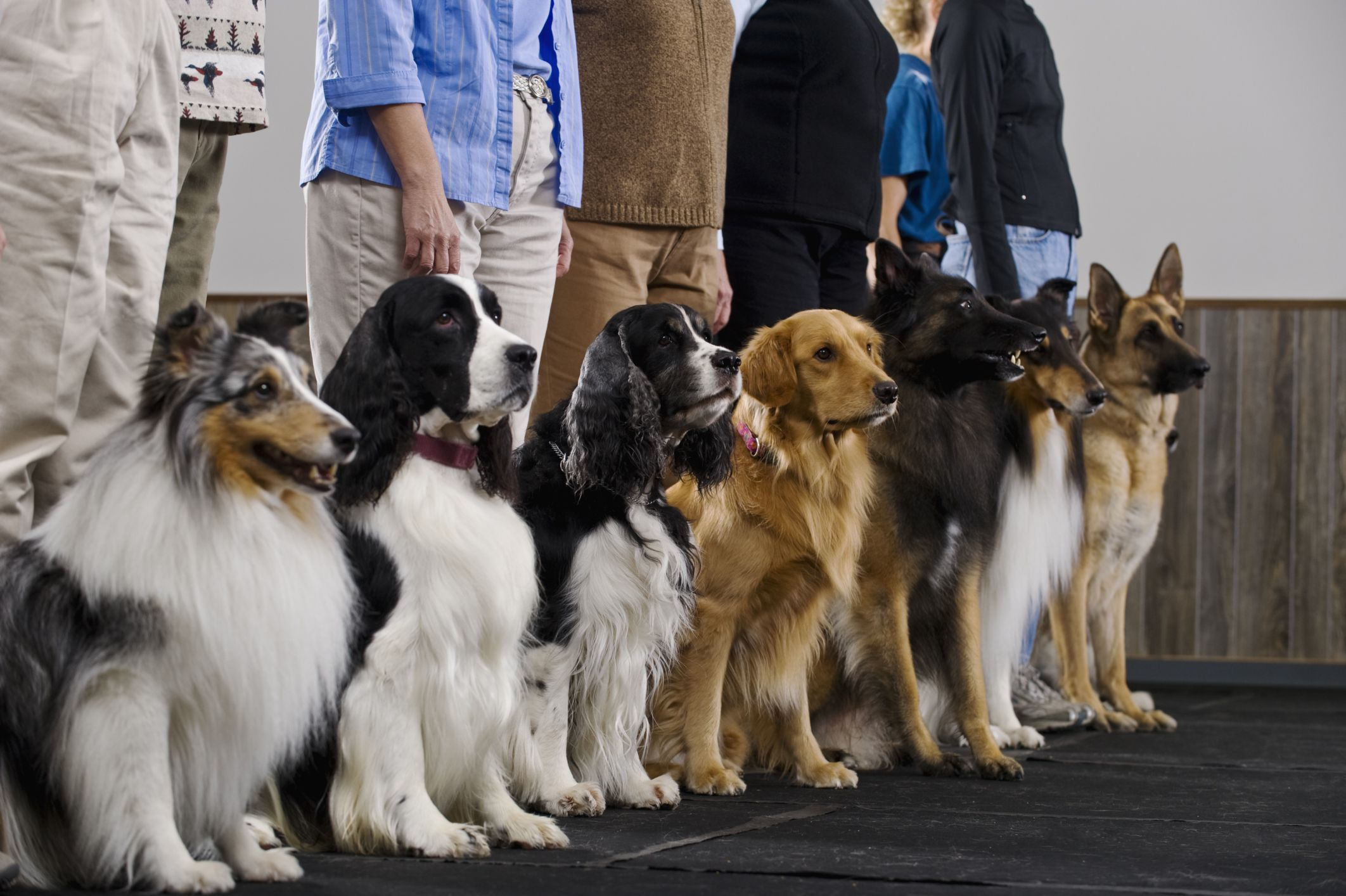Best Dog Training Certification Programs