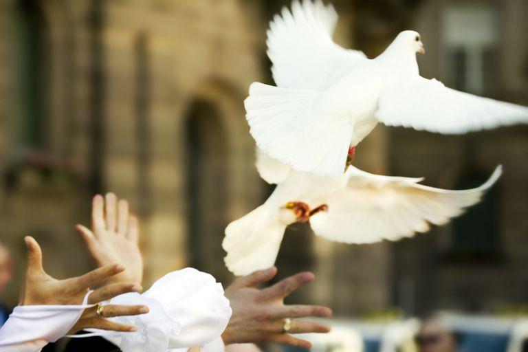 Two doves taking flight
