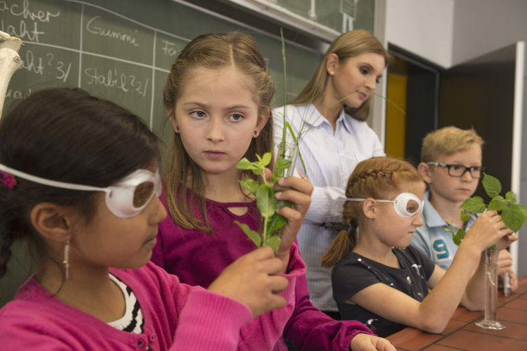 Students: Plant Experiment