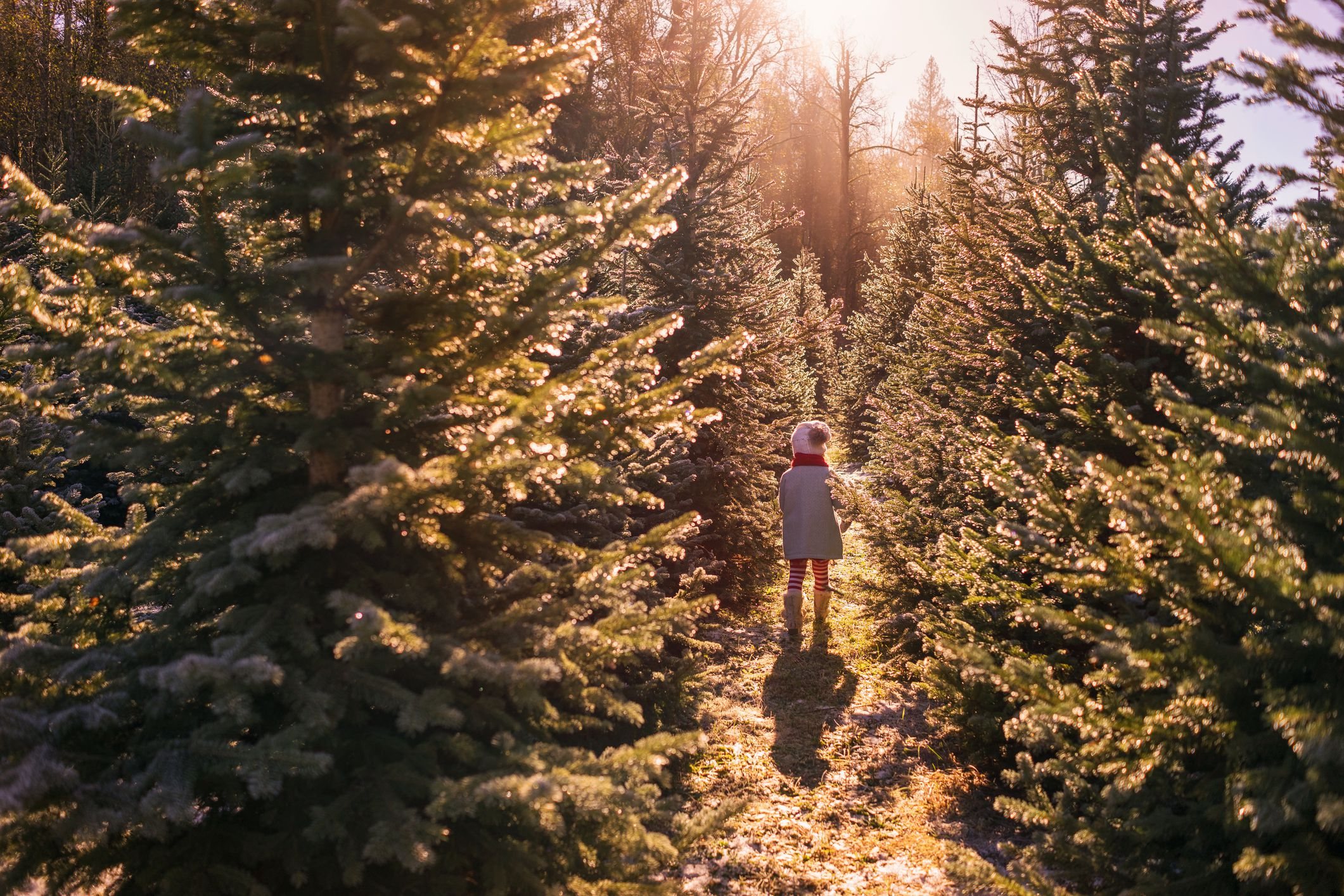 Places To Get A Christmas Tree