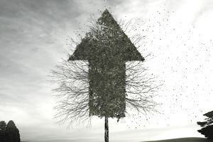 tree_growth