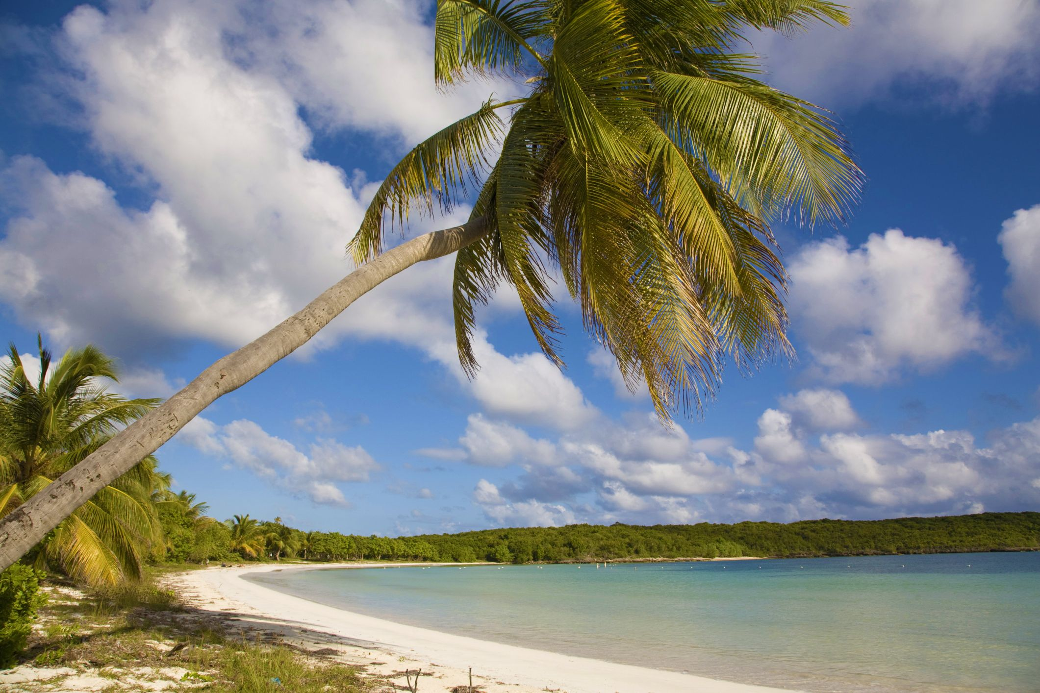 Beaches Of Vieques Puerto Rico Travel Guide-8232