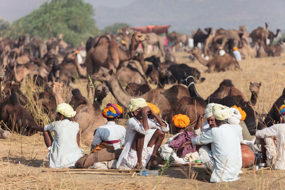 Pushkar Camel Fair.