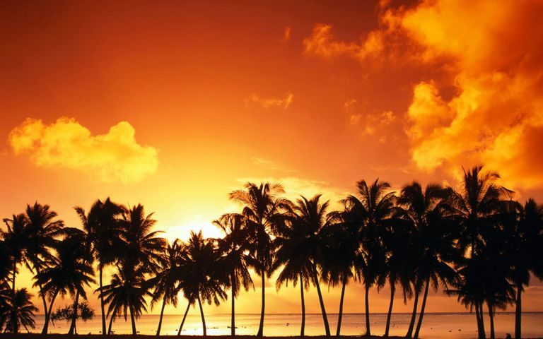 A Sunset With Palm Trees Over The Beach