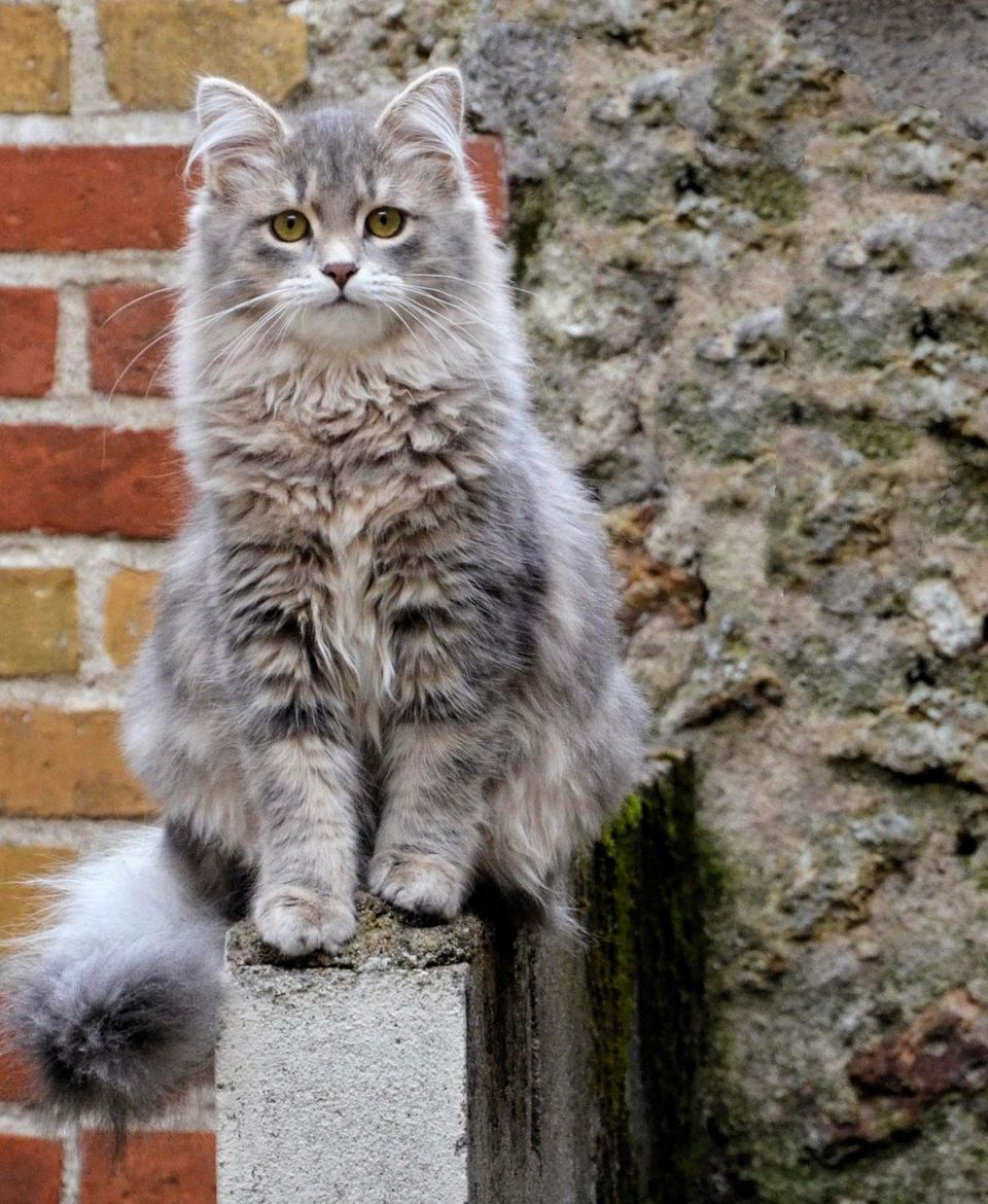 Can Cat Dander Vary From Cat Species