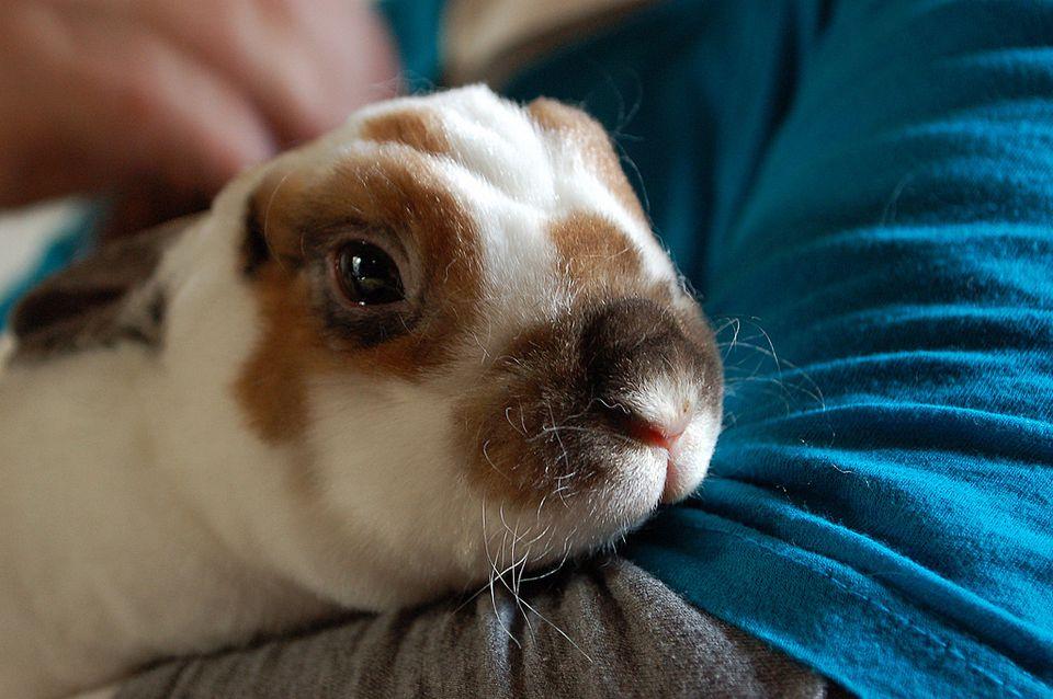 rabbit sick
