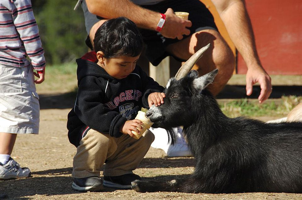 Cox Farms goat and child