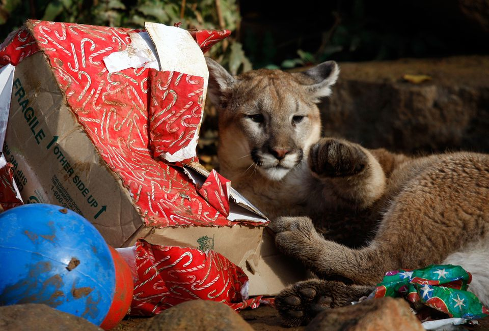 Cougar Cubs Celebrate The Holiday Season