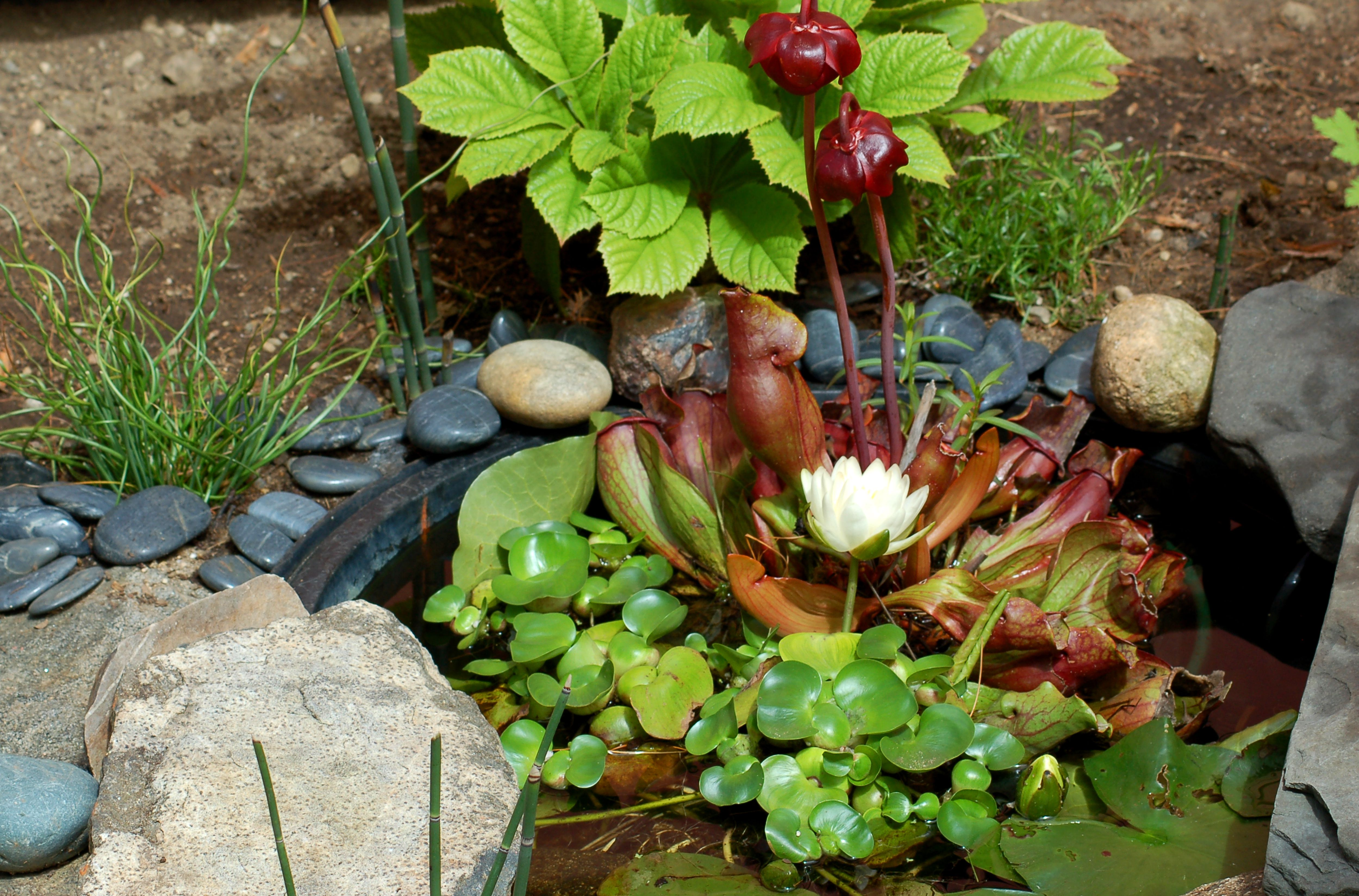 Pond Plants: Best Choices for a Small Area