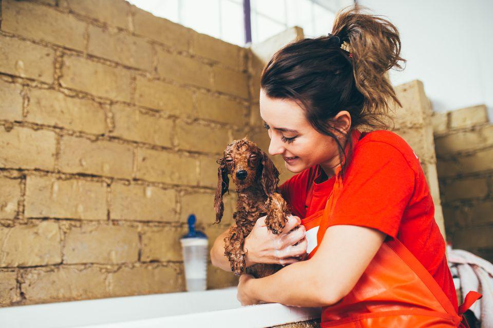 Dog at grooming salon