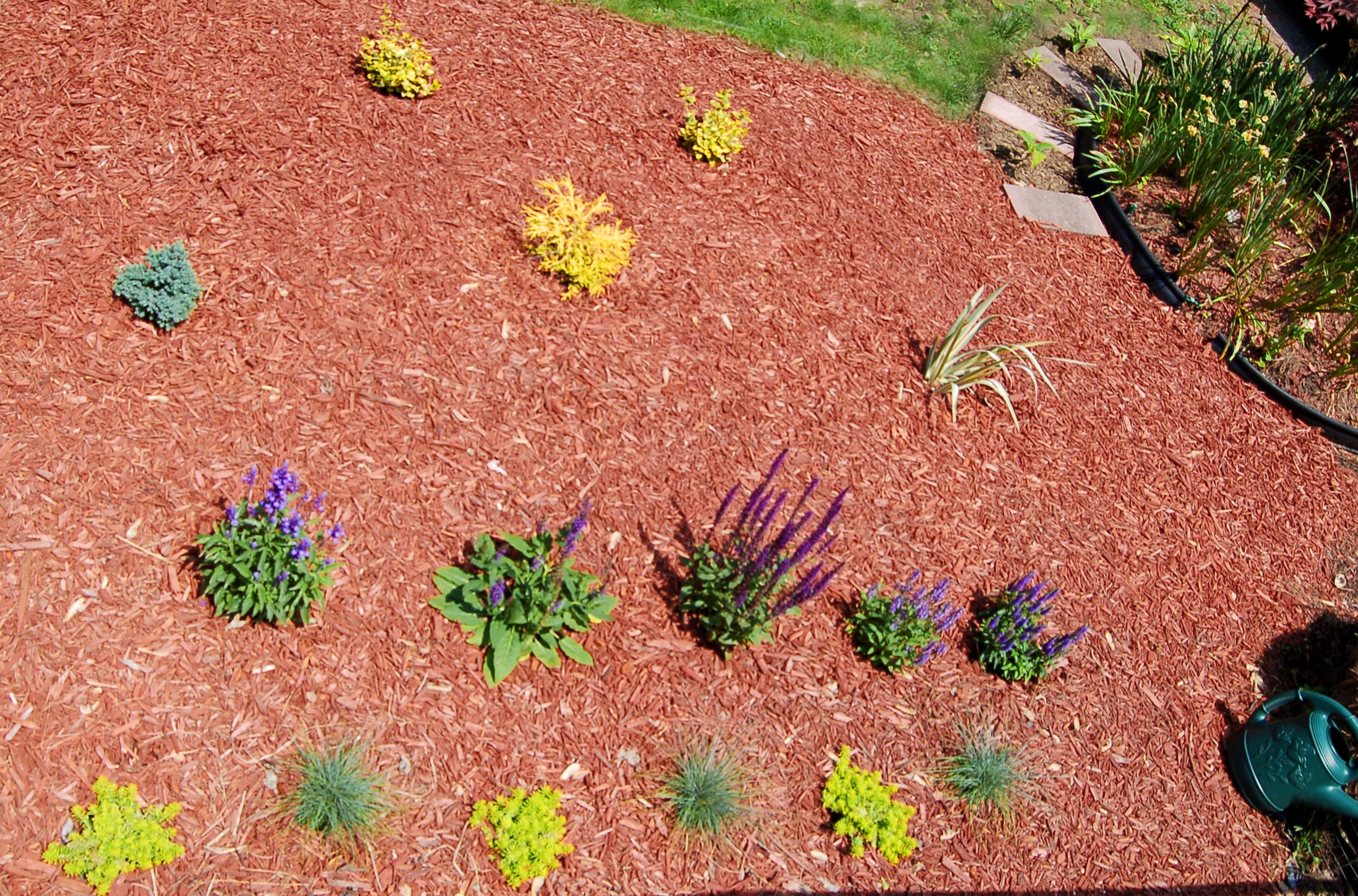 Case study planting flower beds for Best bushes for flower beds