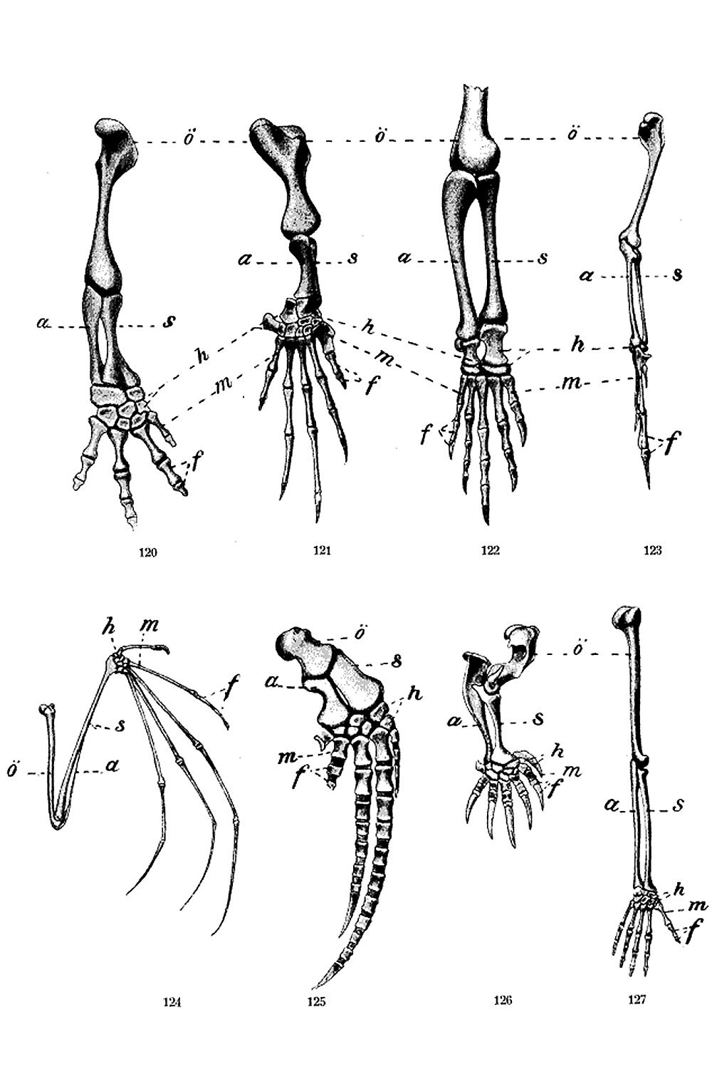 anatomy  evolution  and homologous structures