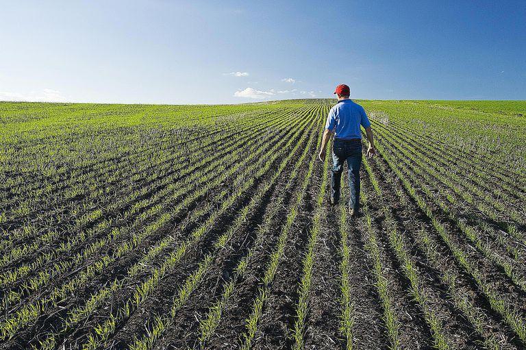 Man walking through field of crops
