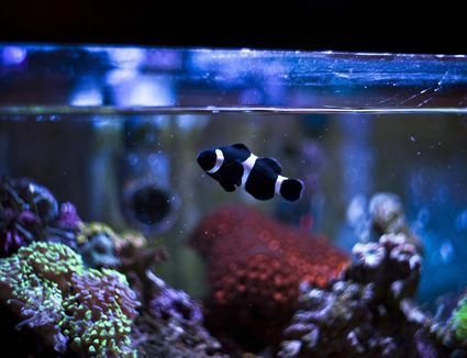 saltwater aquariums for dummies pdf
