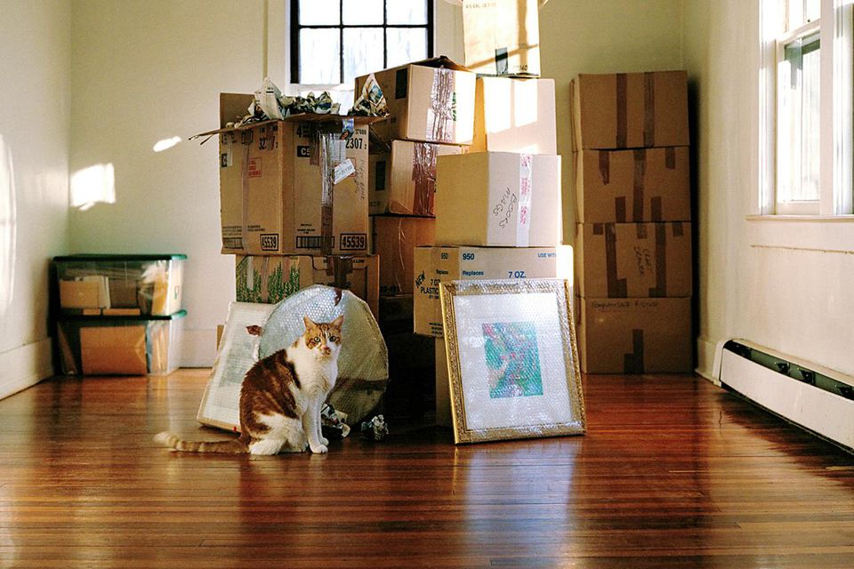 Cat sitting on floor in front of packed moving boxes