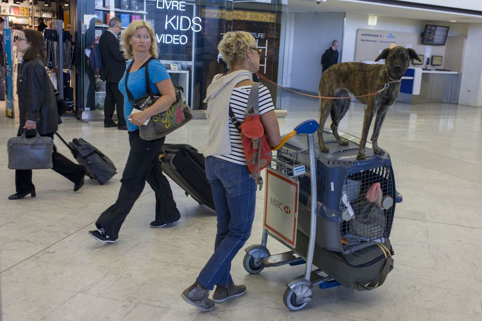 France - Paris - Dog transported on airline cargo box