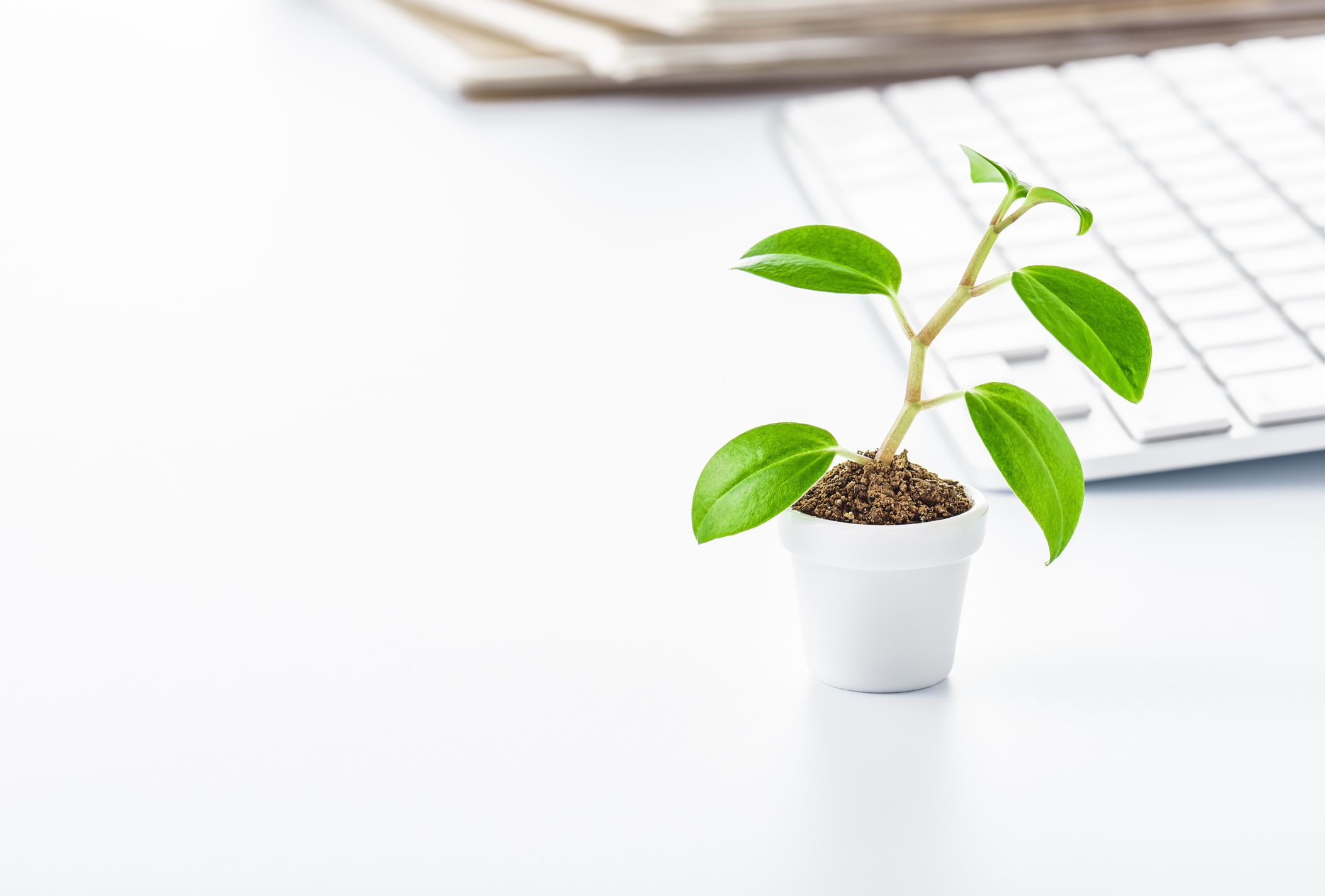 Best indoor plants for your home office Best small office plants