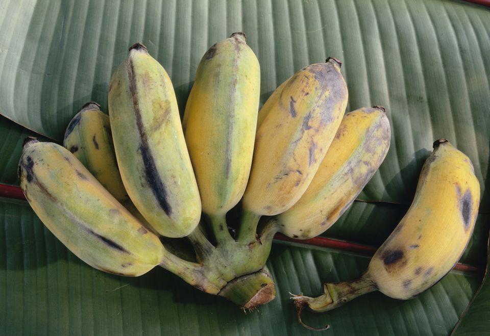 Small Apple Bananas