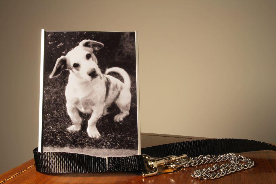 Photo of a white dog in a frame next to collar on a table
