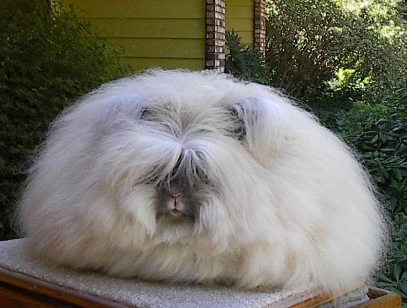 Cat Litter Box For Rabbits