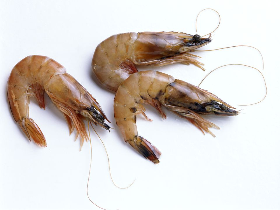 Shrimp Storage And Selection Varieties Sizes More