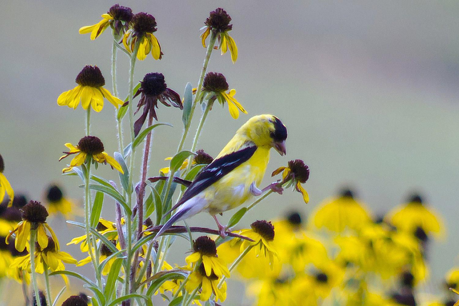 Seed Bearing Flowers And Birds