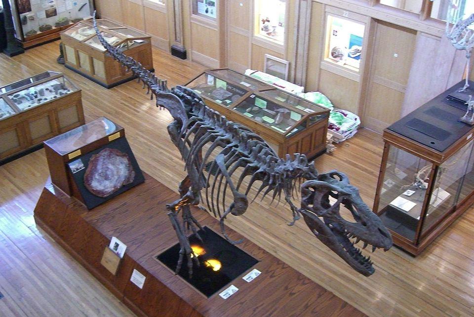 The Redpath Museum houses dinosaur bones, mummies and a shrunken head.