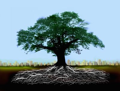 30 common english word roots definitions examples for Terr root meaning