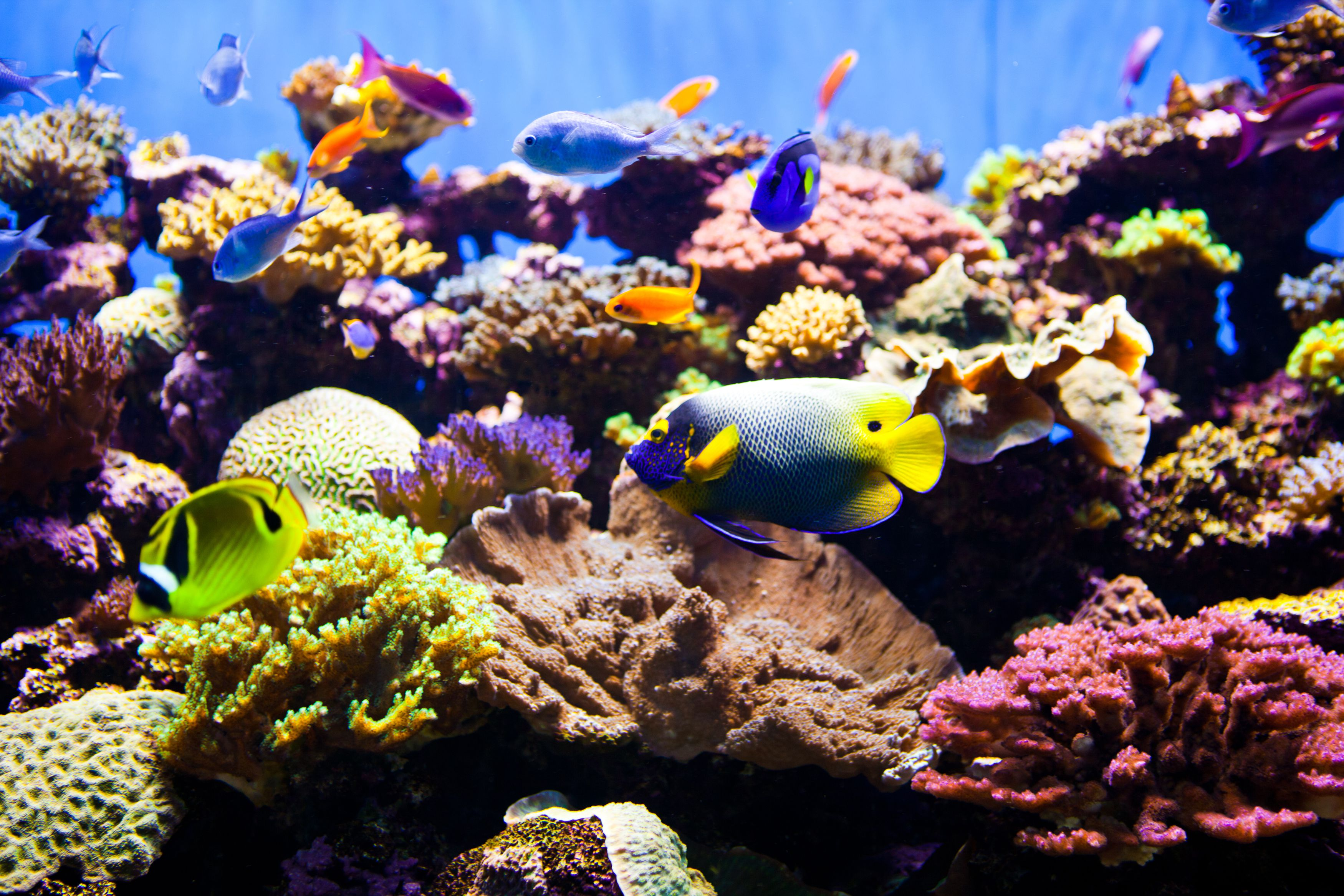 What makes a saltwater aquarium a reef tank for Marine fish tanks