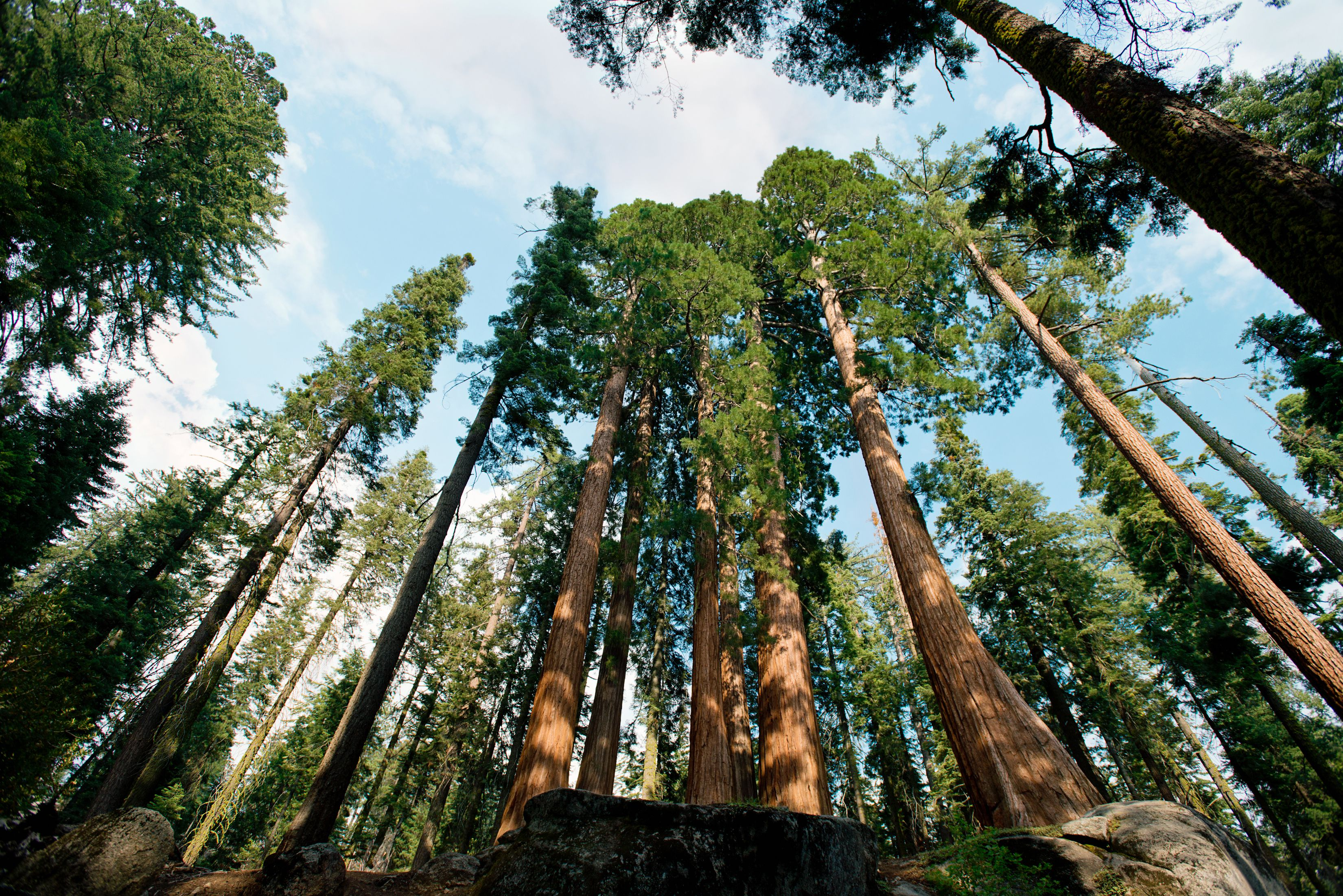 California redwood forests where to see the big trees arubaitofo Images