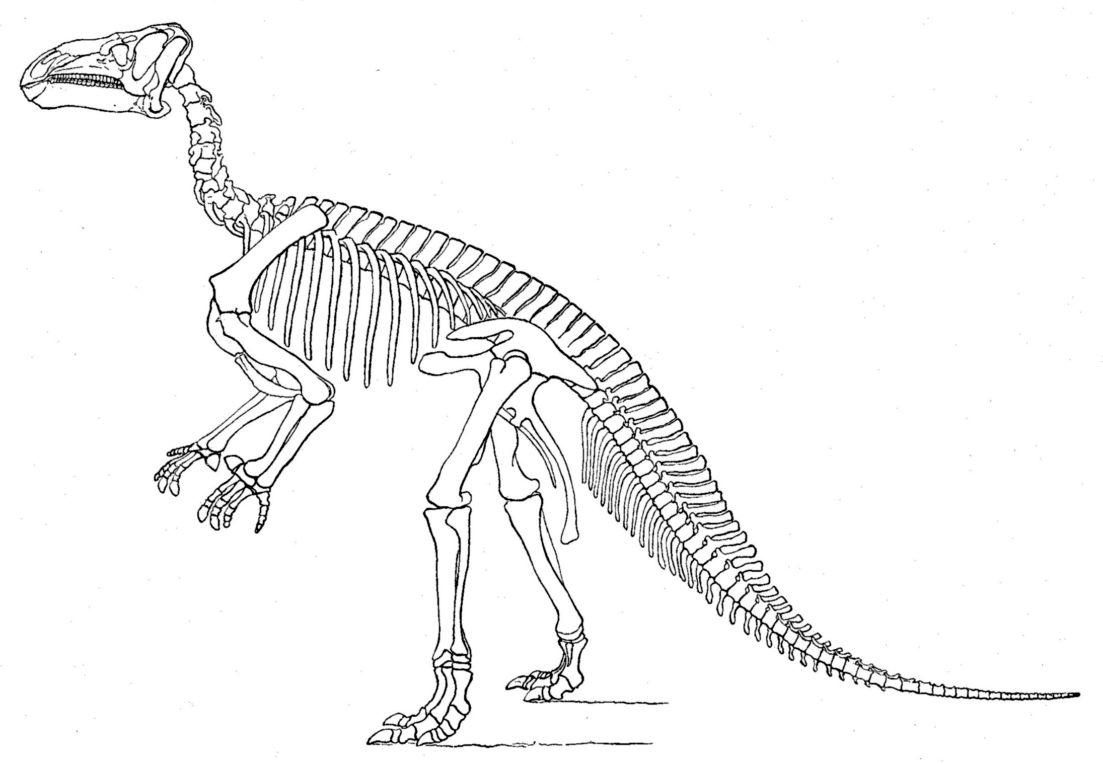interesting facts about iguanodon