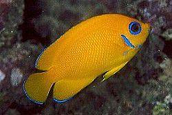 Quiz: Wer wird Meeresbiologe?