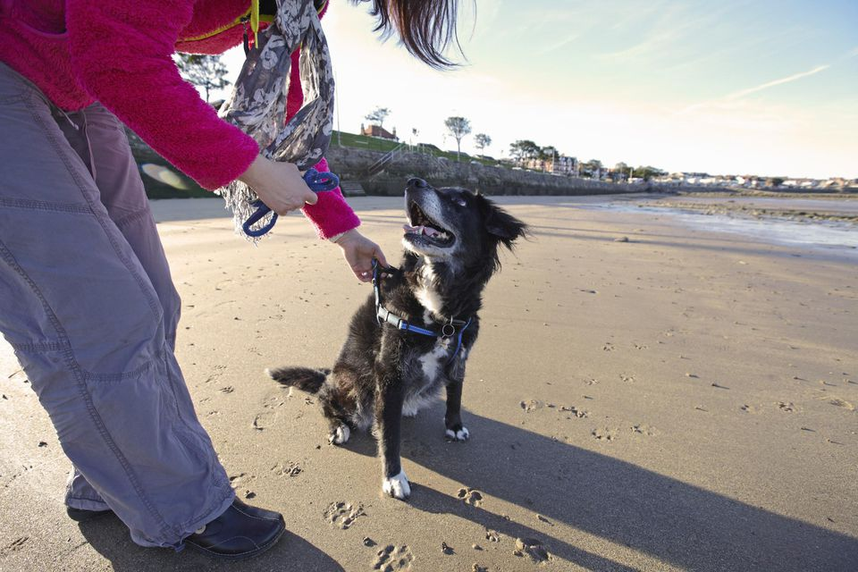 Woman training dog on sandy beach