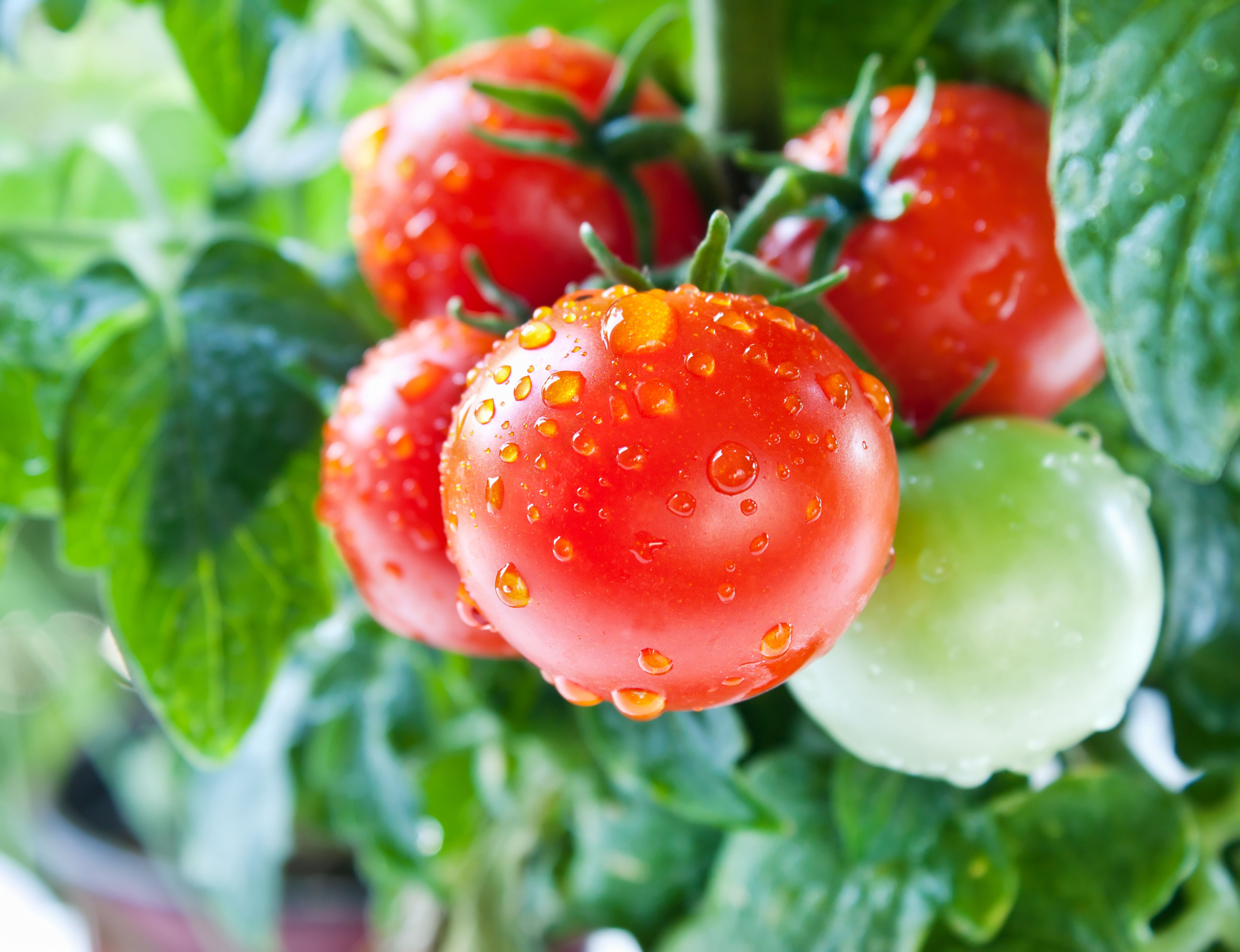 How To Prepare And Eat Tomatoes Low Fat Cooking