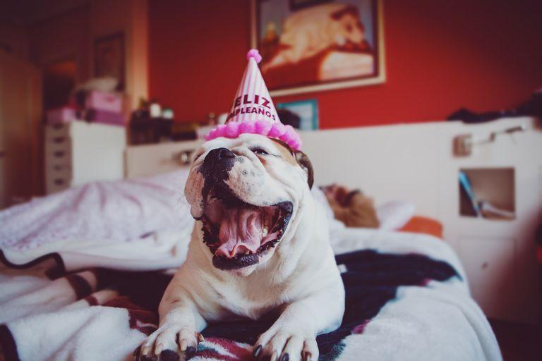 Dog wearing hat