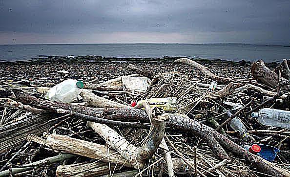 Beach Trash