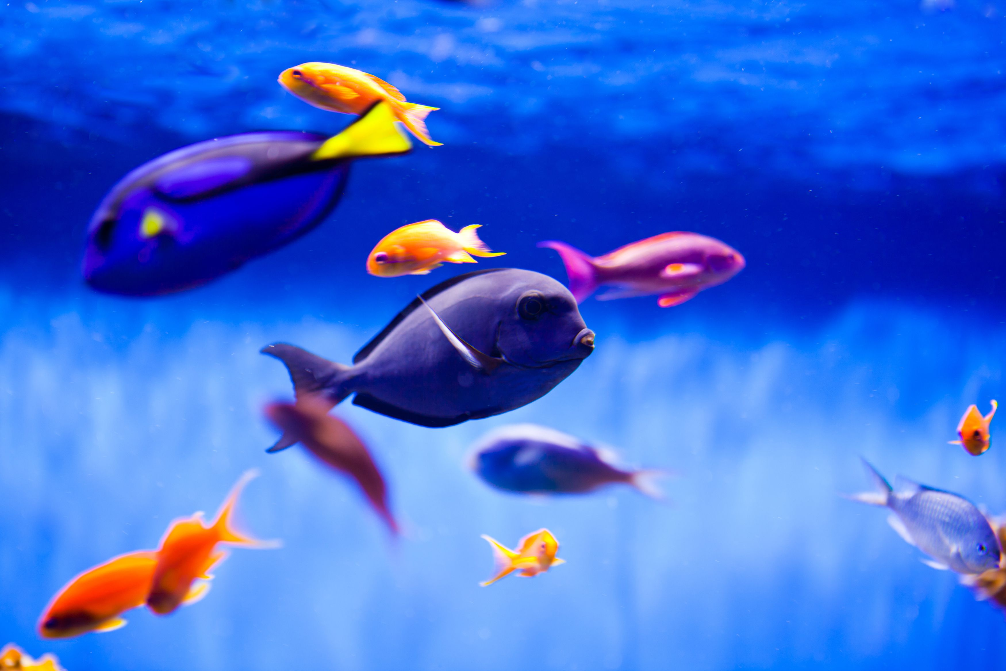 Fo or fowlr to reef tank in 7 easy steps for Easy pet fish