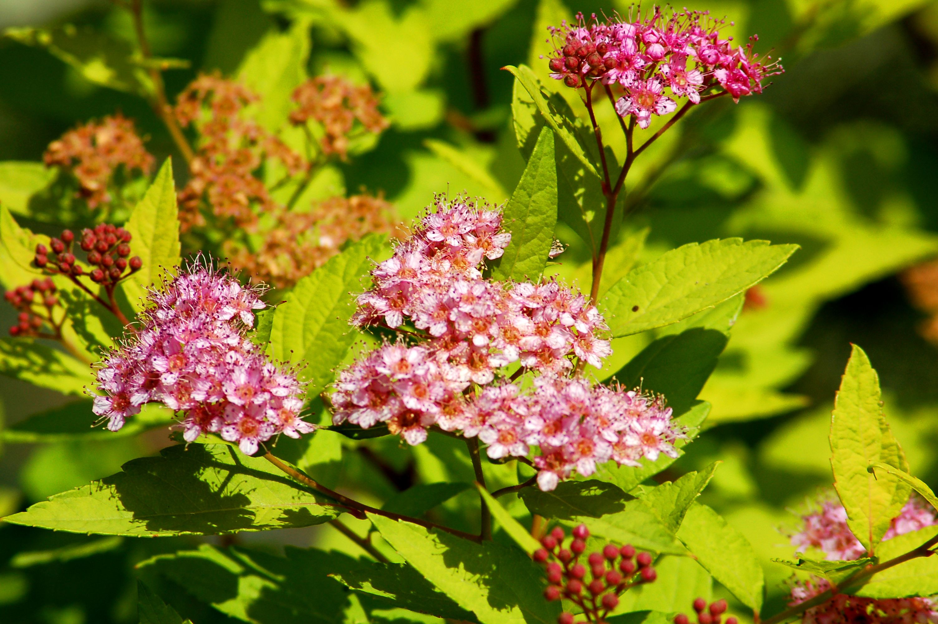 10 Best Shrubs for Full Sun