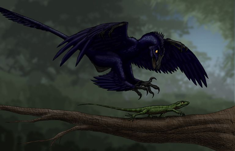 facts about microraptor the fourwinged dinosaur