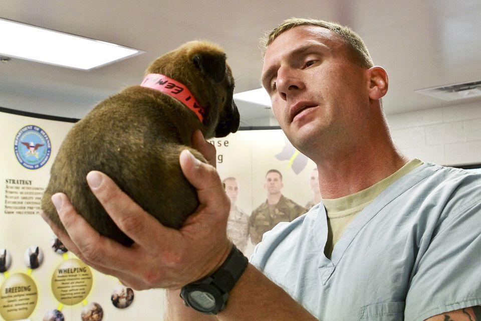 A veterinarian observes a puppy