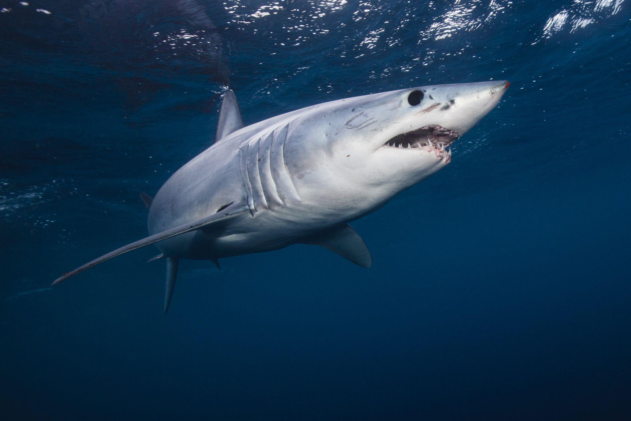 do sharks ever sleep and how