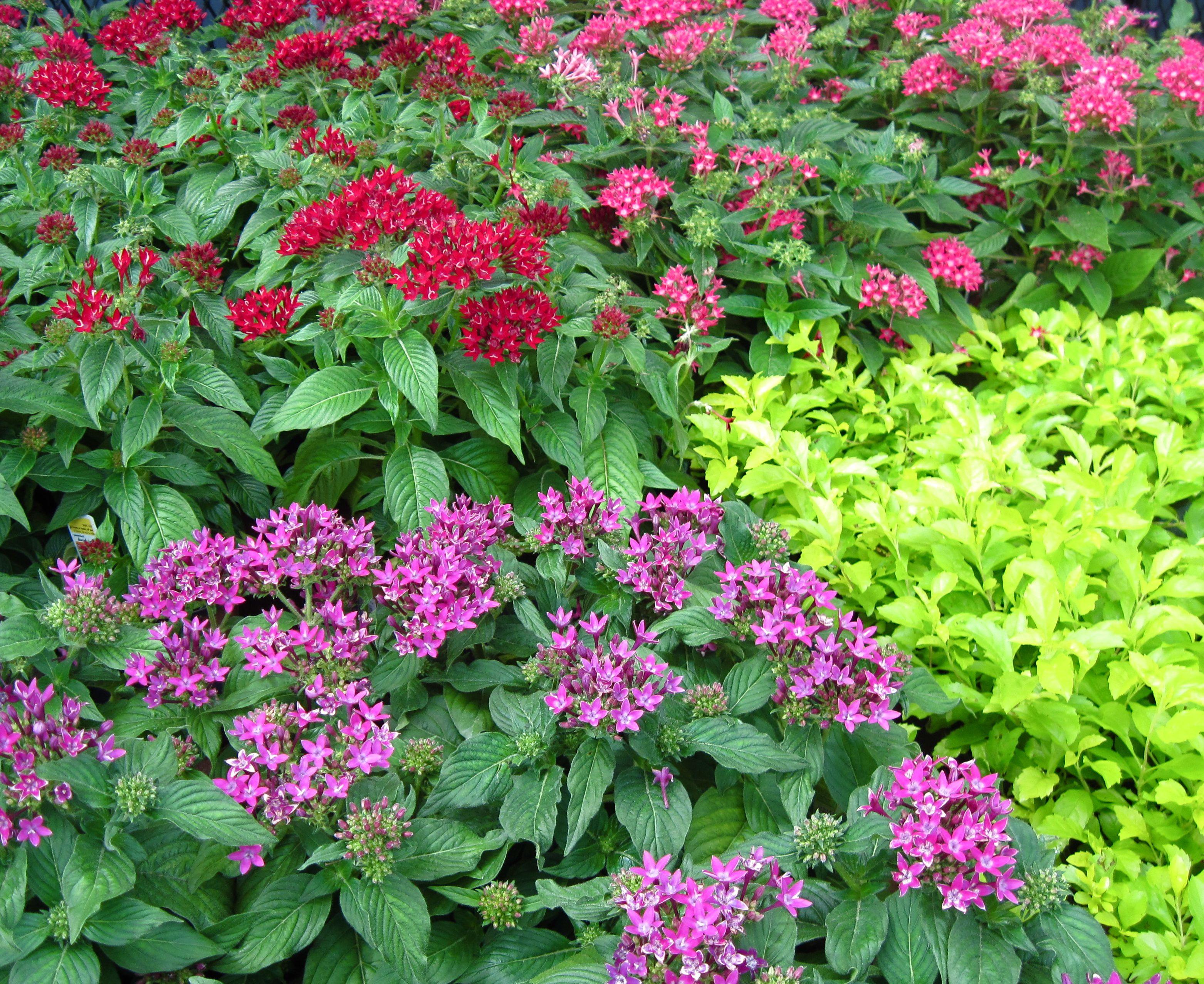 Ideas econ micas para propagar plantas en el jard n for Jardines ideas economicas