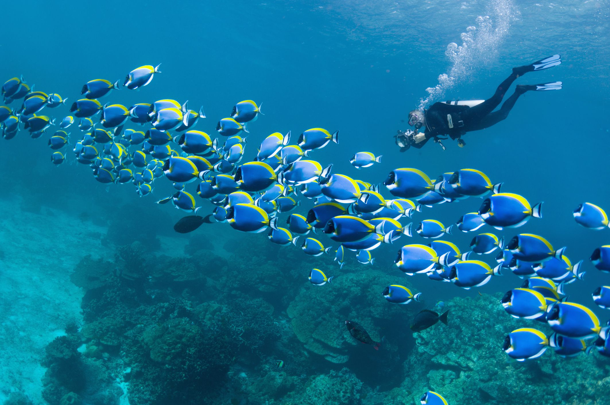 The World's Best Scuba Diving Destinations