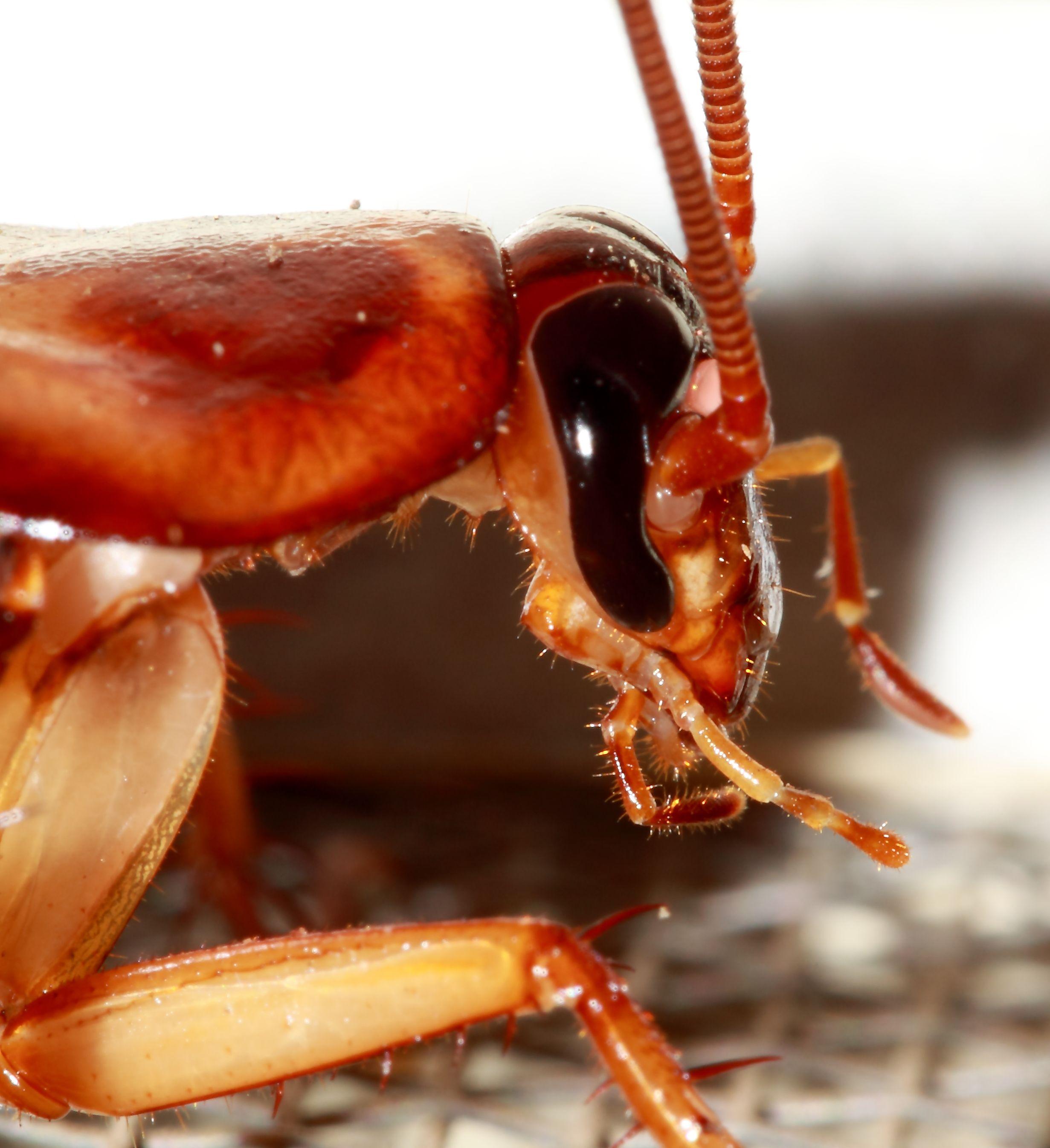 Como eliminar plagas de insectos y roedores sin quimicos for Como eliminar plaga de hormigas