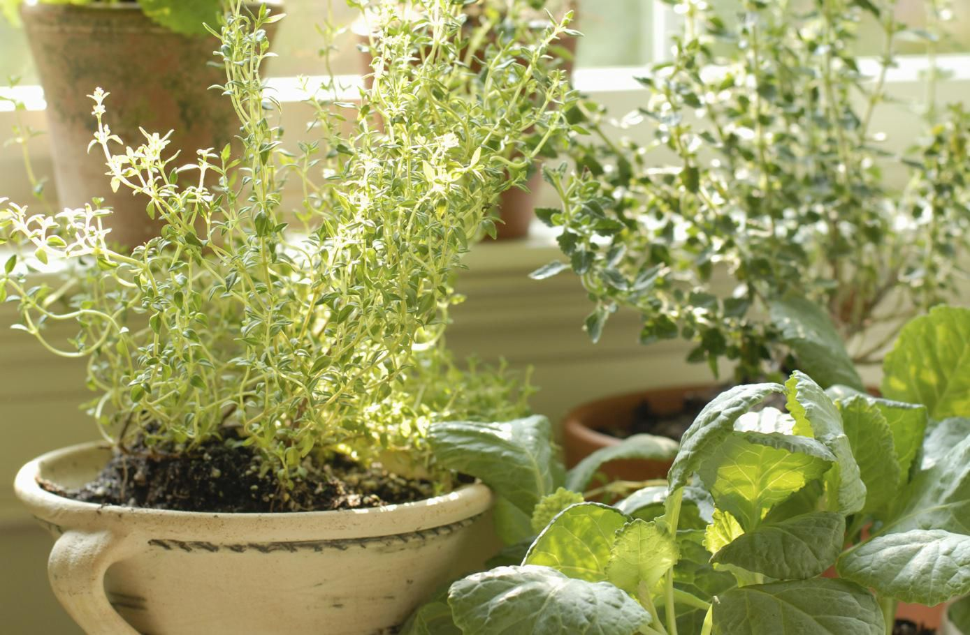 5 Best Herbs For Container Gardening